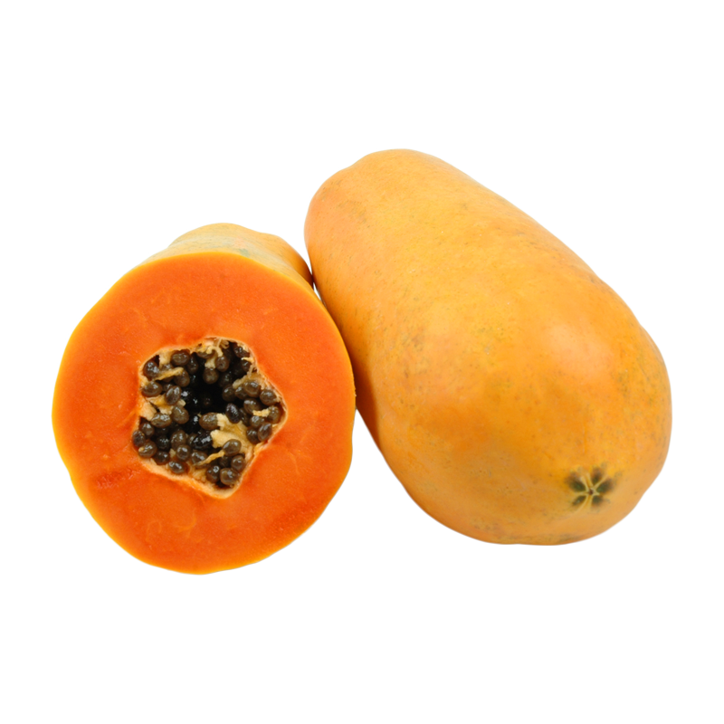 <b>Holland Papaya</b>