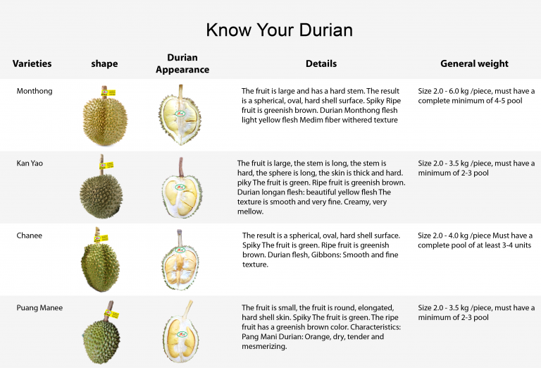 Know Your Durian